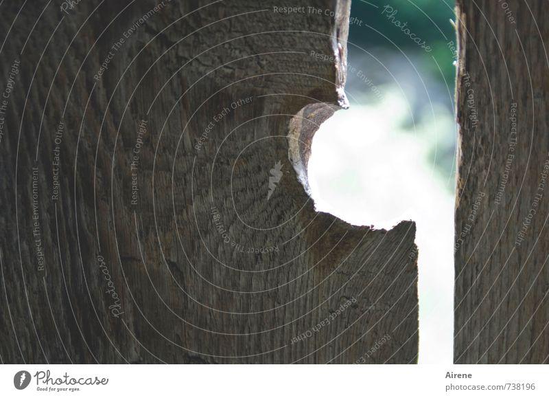 Trockenheit | dürres Holz Brücke Mauer Wand Brückengeländer Holzwand Holzbrett Holzbrücke Zeichen beobachten blau braun grün weiß Durchblick Öffnung Wölbung