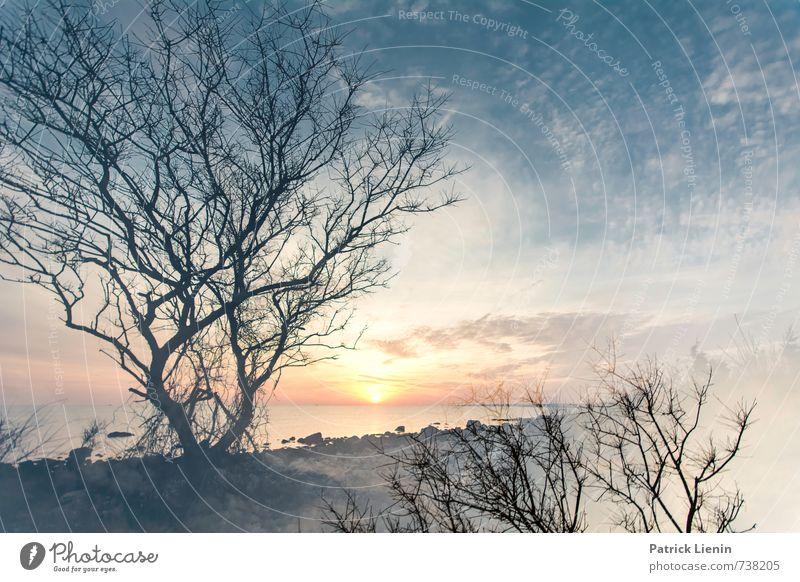 sky high Natur Ferien & Urlaub & Reisen Pflanze Sonne Baum Meer Erholung Landschaft ruhig Strand Wald Umwelt Küste Gesundheit Wetter Zufriedenheit