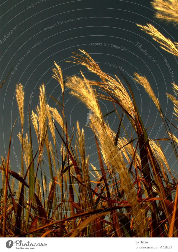Kontrastprogramm II Natur blau Gras Gesundheit Wachstum ökologisch vertikal aufstrebend