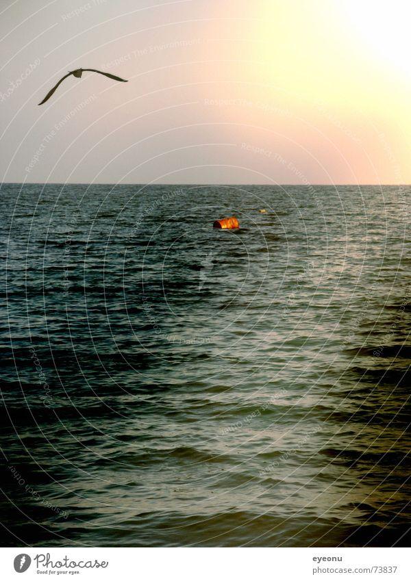 schwarzes Meer Wasser Sonne Meer Ferne Schifffahrt Möwe Abenddämmerung Boje Lichtschein Lichtstrahl Bulgarien Schwarzes Meer