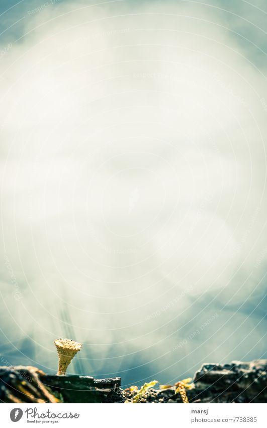 Textfreiraum | Nur ganz unten... Natur Pflanze Sommer Einsamkeit Traurigkeit Frühling Hintergrundbild außergewöhnlich Stimmung träumen authentisch stehen