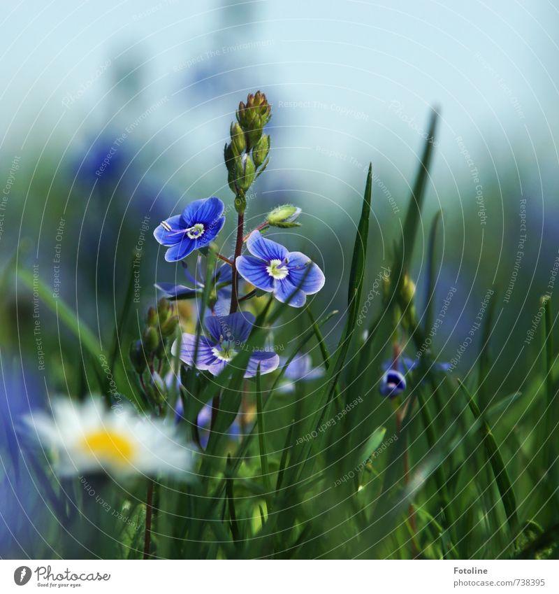 Happy Birthday Schwesterchen! Umwelt Natur Pflanze Himmel Wolkenloser Himmel Frühling Schönes Wetter Blume Blüte Garten Park Wiese frisch hell blau gelb grün