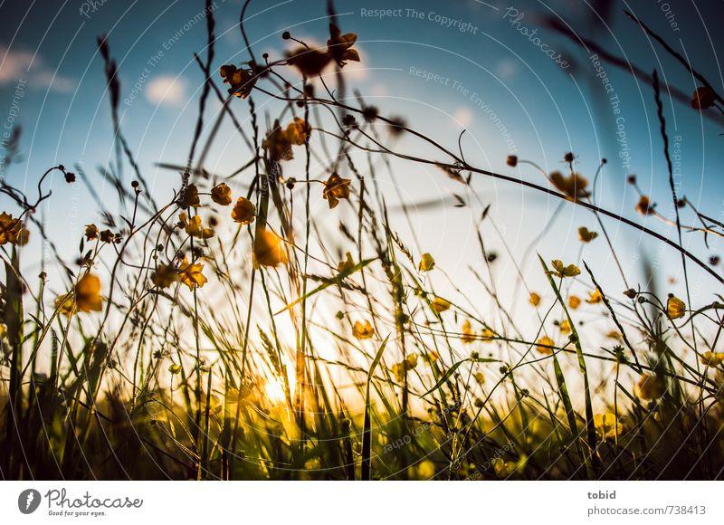 Frühlingswiese Himmel Natur blau schön grün Pflanze Sommer Sonne Blume Landschaft Wolken gelb Wiese Gras Freiheit