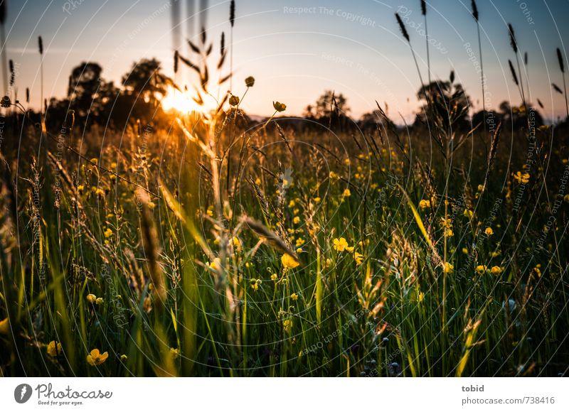 Beautiful Sunset Himmel Natur blau grün Pflanze Sommer Sonne Baum Erholung Blume Landschaft Ferne gelb Wiese Frühling Gras
