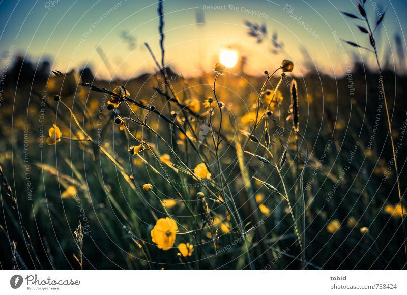 Beautiful Sunset No.2 Natur Landschaft Pflanze Himmel Wolkenloser Himmel Sonne Sonnenaufgang Sonnenuntergang Sonnenlicht Frühling Schönes Wetter Gras