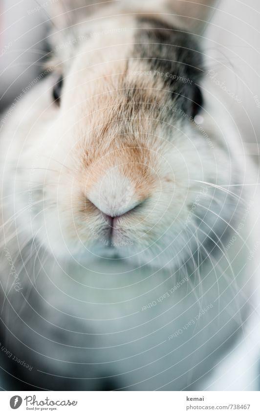Und montags grüßt der Helmut schön Tier hell Freundschaft niedlich Freundlichkeit Fell nah Tiergesicht Haustier Hase & Kaninchen Sympathie Schnauze Tierliebe