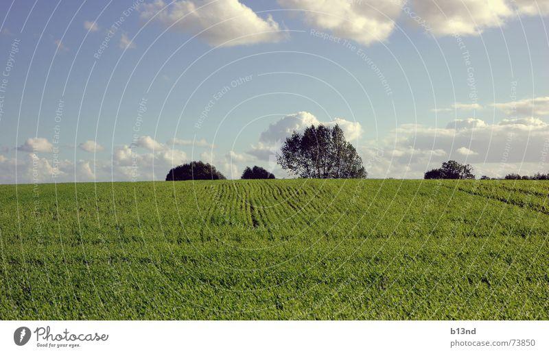 Feel the freedom Baum Feld grün Wolken Ferne Horizont Herbst Ostsee Himmel blau Landschaft landscape frei Freiheit herbstlich