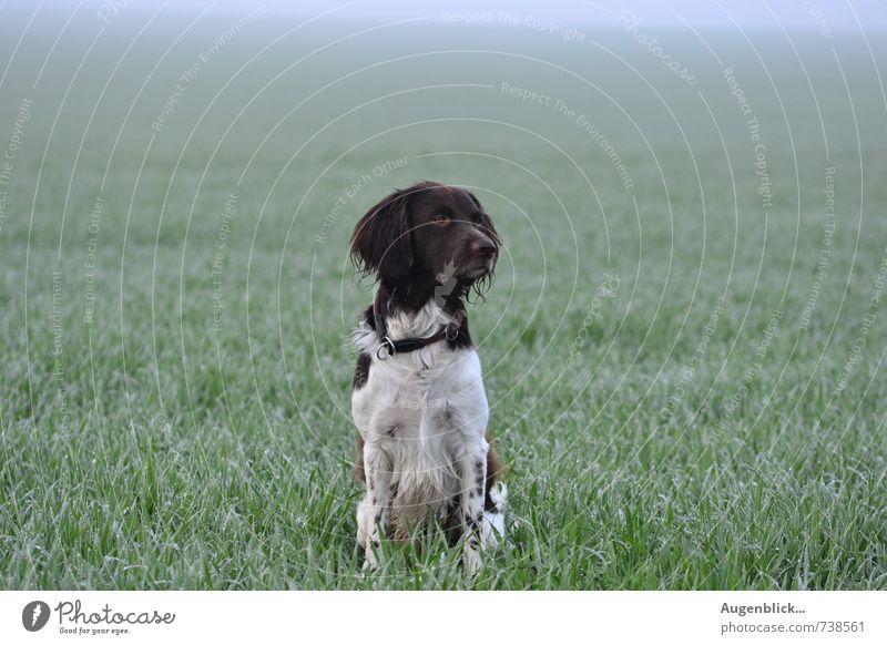 aller bester Freund... Hund blau grün weiß Tier Liebe Bewegung Sport natürlich braun nass beobachten Haustier achtsam Tierliebe