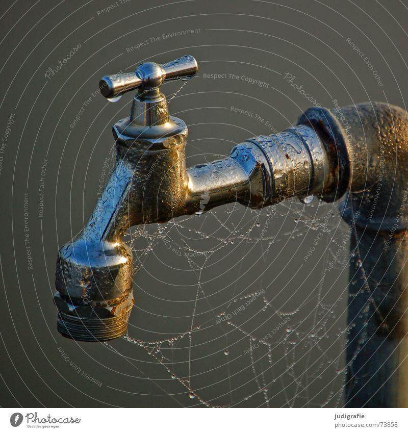 Wasserhahn nass Spinnennetz Spinngewebe Wassertropfen Tau Morgen feucht Nebel Anschluss glänzend Metall gelehrt Steg Drehgewinde Eisenrohr