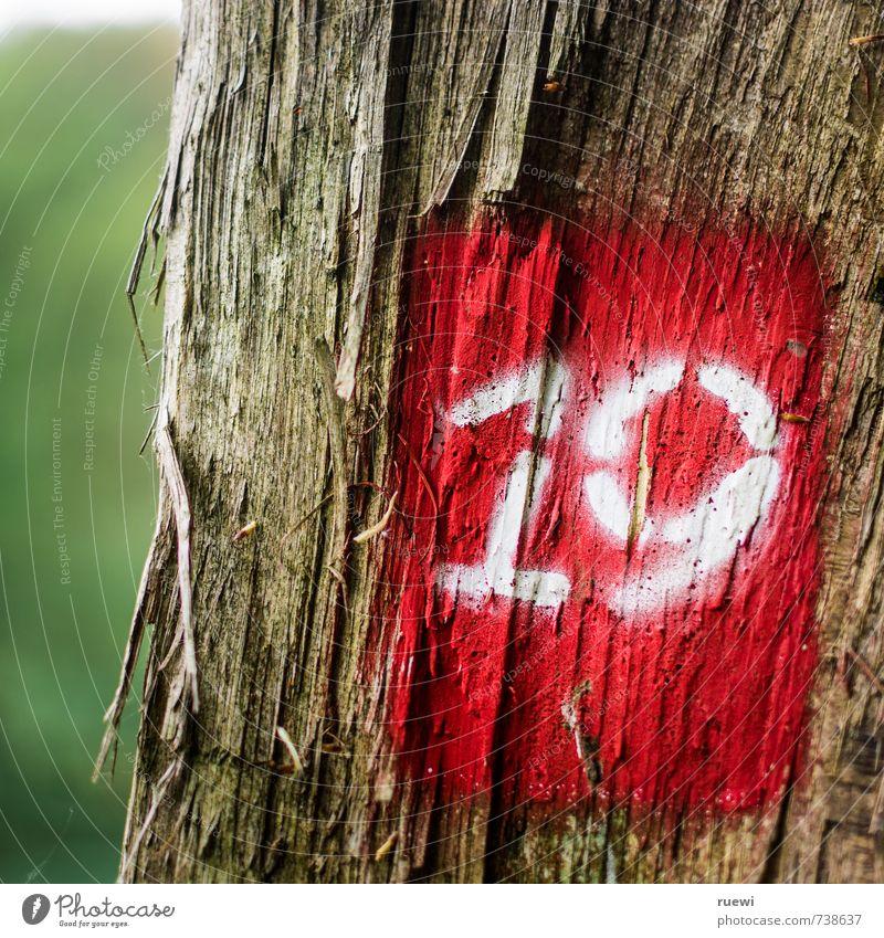 Auch ein schönes Alter Natur Ferien & Urlaub & Reisen alt Sommer Baum rot Wald Umwelt Leben Bewegung Herbst Frühling Holz Feste & Feiern braun