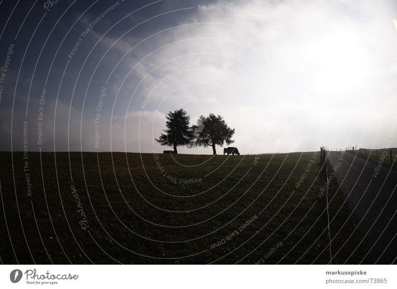 schattenlauf II. Baum Wolken Gegenlicht Kuh Horizont Sonne Schatten Weide Ferne Straße