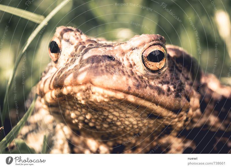 Ich weiß, was Du letzten Sommer getan hast schön Garten Umwelt Natur Tier Frühling Herbst Schönes Wetter Pflanze Gras Wiese Wildtier Kröte Unke Frosch 1
