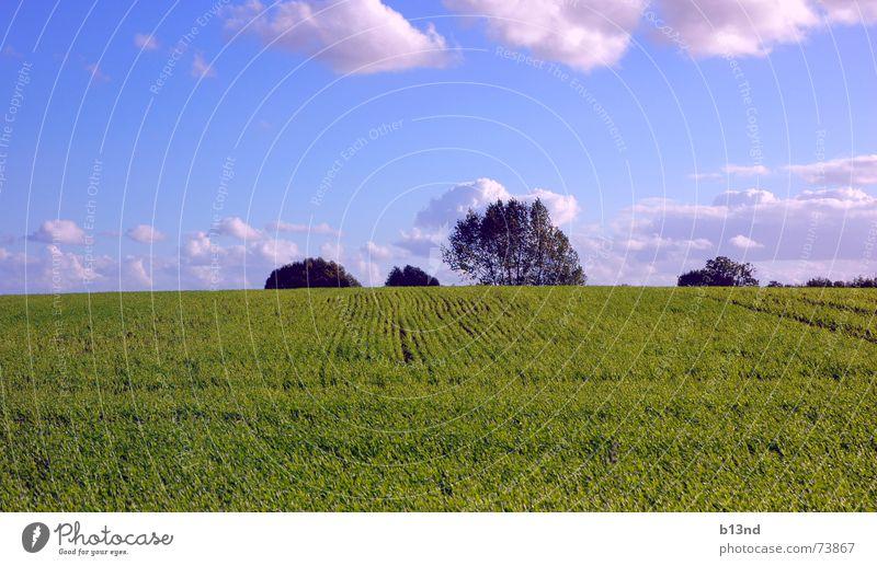 Feel the freedom - Part II Baum Feld grün Wolken Ferne Horizont Sommer sommerlich Ostsee Himmel blau Landschaft landscape frei Freiheit