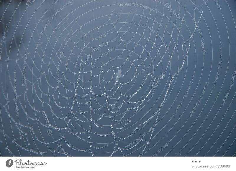 Netztau Natur Wasser Wassertropfen schlechtes Wetter Regen Spinne bauen beobachten fangen festhalten glänzend hängen leuchten ästhetisch außergewöhnlich elegant