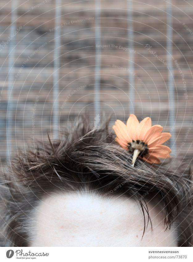 Stirnblume im Haupthaar Biotop Blume Pflanze Haare & Frisuren Kopf Stirn Biotop Freakshow