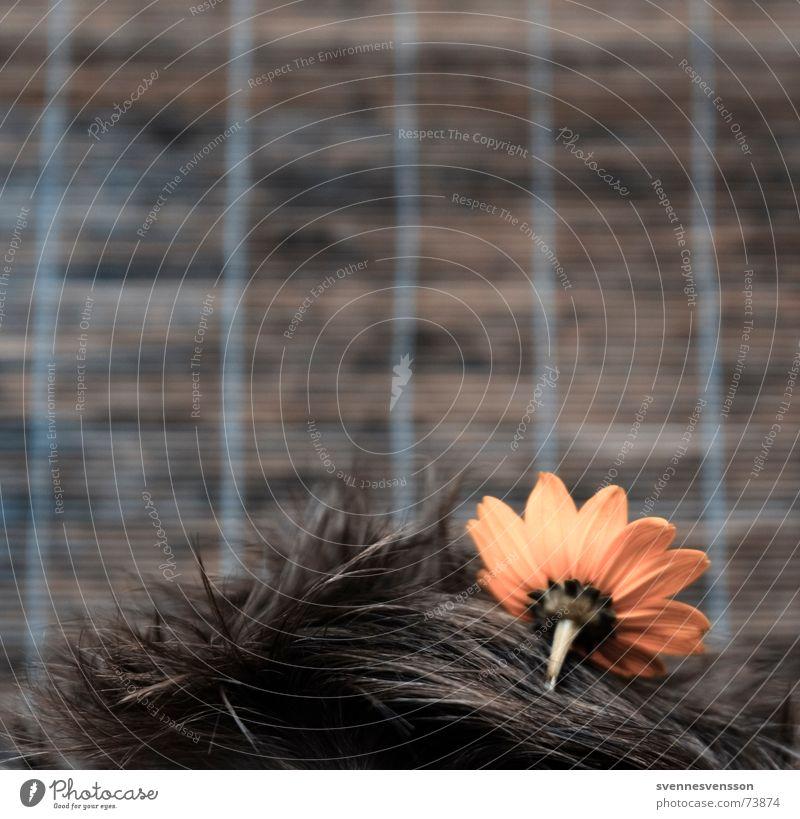 Haarbeet Mensch Blume Pflanze Haare & Frisuren Kopf Biotop Freakshow