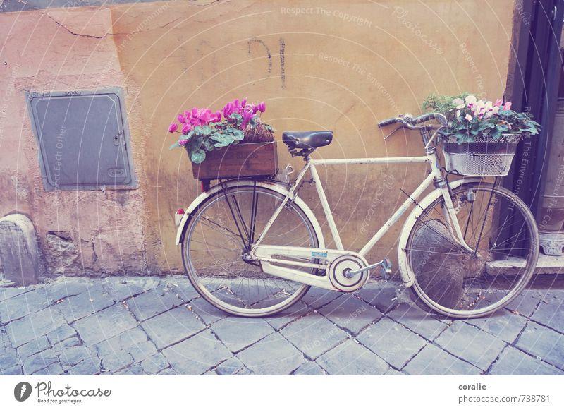 radfahren ist schön. Sommer Blume Wand Liebe Frühling Mauer Spielen Glück Garten Kunst Fassade Wohnung Lifestyle Häusliches Leben Dekoration & Verzierung