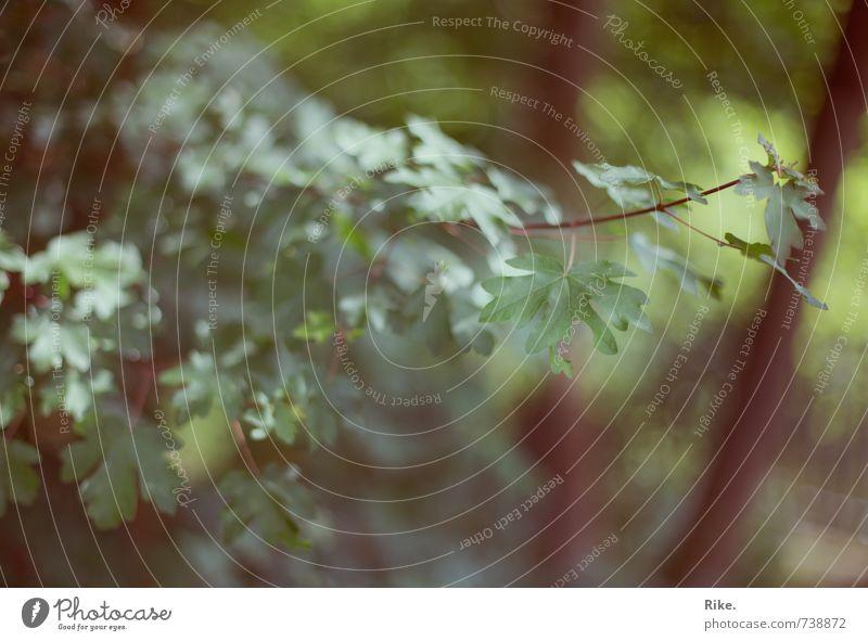 Im Wald. Umwelt Natur Pflanze Frühling Sommer Baum Sträucher Blatt Grünpflanze Wildpflanze Garten Wachstum natürlich weich grün Vergänglichkeit Farbfoto