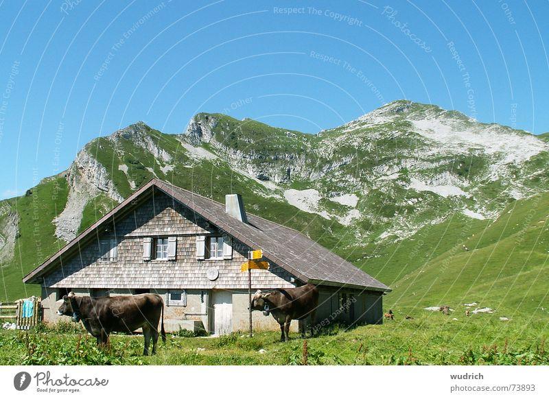 gemütliche Alp grau Geröll bewachsen Schweiz Stein Kalkstein Bergkette Gipfel Heimat Alm Gras Kuh Rind wetterfest Dach Stabilität braun Landwirtschaft grün