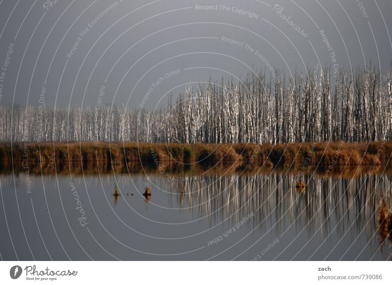 Stammesversammlung Umwelt Natur Landschaft Wasser Himmel Herbst Winter Wetter schlechtes Wetter Nebel Pflanze Baum Sträucher Grünpflanze Birke Birkenwald Küste