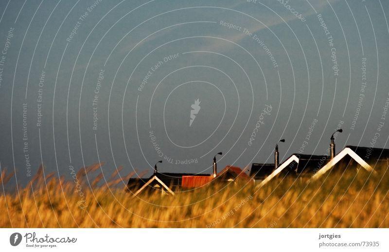 Versteckspiel Strand Haus Gras Küste Dach Getreide verstecken Halm Schornstein Kornfeld Dänemark Skandinavien