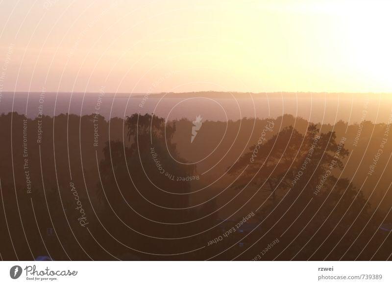 Sonnenuntergang auf Seeland Landschaft Himmel Sonnenaufgang Sonnenlicht Baum Küste Ostsee Meer Insel Dänemark Stimmung ruhig Zufriedenheit Abenddämmerung