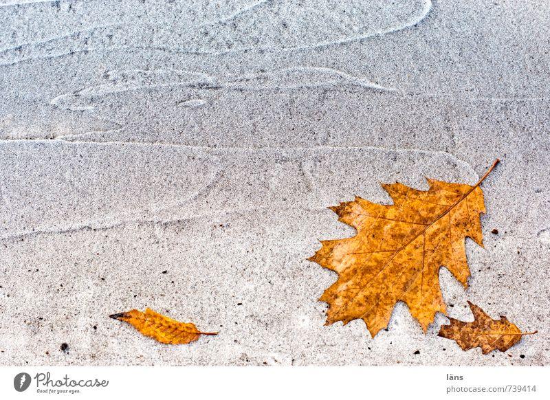 alles im Fluss Herbst Blatt Straße Wege & Pfade Linie alt braun orange weiß Vergangenheit Vergänglichkeit Wandel & Veränderung Eichenblatt liegen Delikt