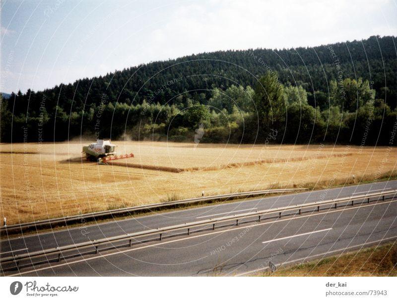 Montana Himmel Baum Wald Straße Feld Korn Jahr Weizen Roggen