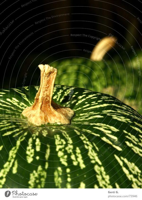 es soll auch Grüne geben grün Grünkern Kürbiskern Muster Ordnung Stengel Kürbiszeit Halloween Kürbissuppe Erntedankfest Gemüsesuppe Vegetarische Ernährung hart
