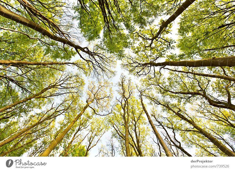 Wettlauf in die Höhe Umwelt Natur Landschaft Pflanze Frühling Schönes Wetter Baum Wald Urwald Küste Seeufer Ostsee Gefühle Stimmung Frühlingsgefühle Vorfreude