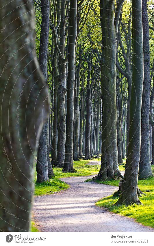 Der Weg durch den Gespensterwald Freizeit & Hobby Ferien & Urlaub & Reisen Tourismus Ausflug Sightseeing wandern Umwelt Natur Landschaft Frühling Klima