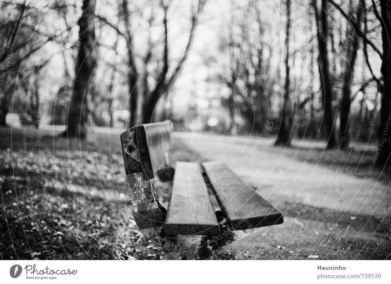 verlassene Bank Umwelt Natur Landschaft Sonnenlicht Frühling Schönes Wetter Baum Sträucher Park Wiese Bayern Kleinstadt Wege & Pfade Parkbank Stein Beton Holz