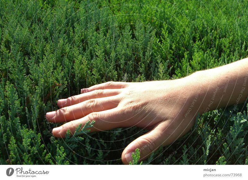 Patsche Gelenk Koloss Grüner Daumen Hand Sträucher grün beige Hautfarbe Nagel Finger Fingernagel Pflanze Streicheln Querformat Handrücken Gefühle nass Sommer