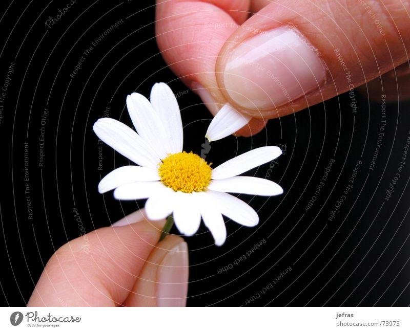 well wants me... Hand Liebe Leidenschaft planen Gefühle flower fingers happiness