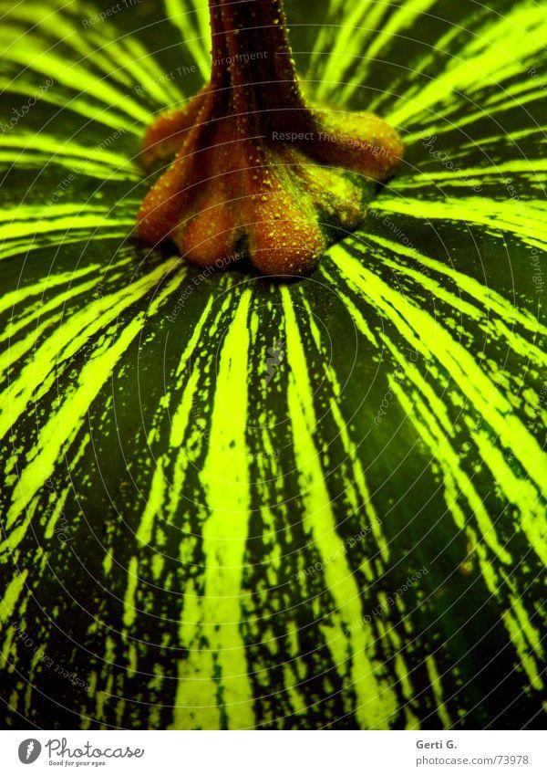 grühün grün Ordnung Gemüse Stengel Ernte Fett hart Halloween Kürbis Vegetarische Ernährung Erntedankfest Kürbiszeit Kürbiskern Gemüsesuppe Kürbissuppe Grünkern