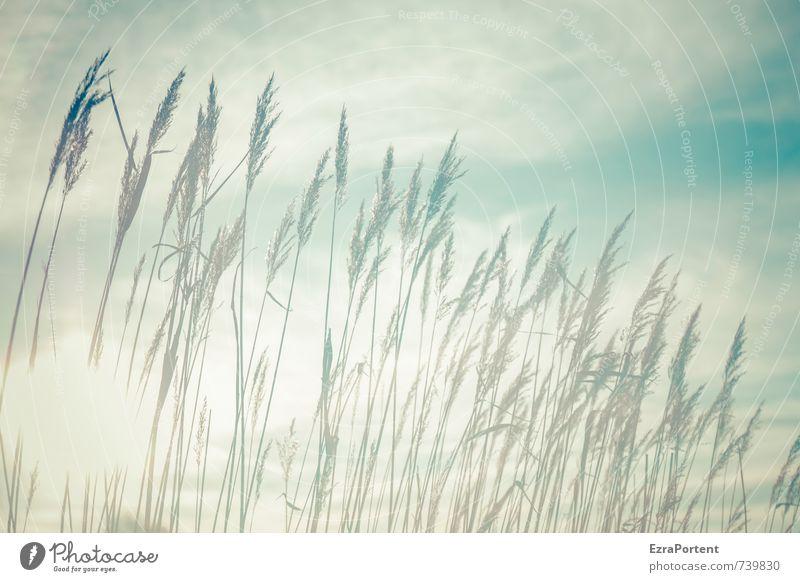 im Licht Himmel Natur blau weiß Pflanze Sommer Sonne Landschaft Wolken Umwelt Wärme Wiese Herbst Frühling Gras Garten