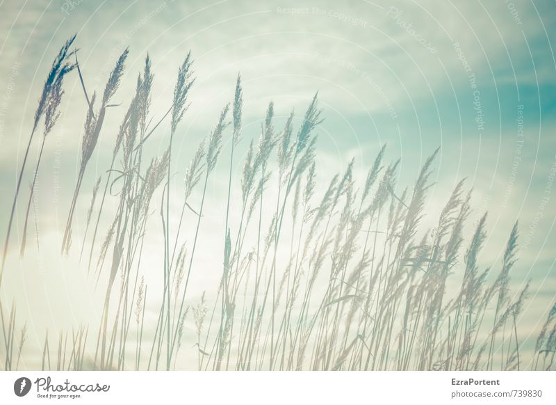 im Licht Umwelt Natur Landschaft Pflanze Luft Himmel Wolken Sonne Frühling Sommer Herbst Klima Wetter Schönes Wetter Wärme Gras Garten Wiese Feld leuchten