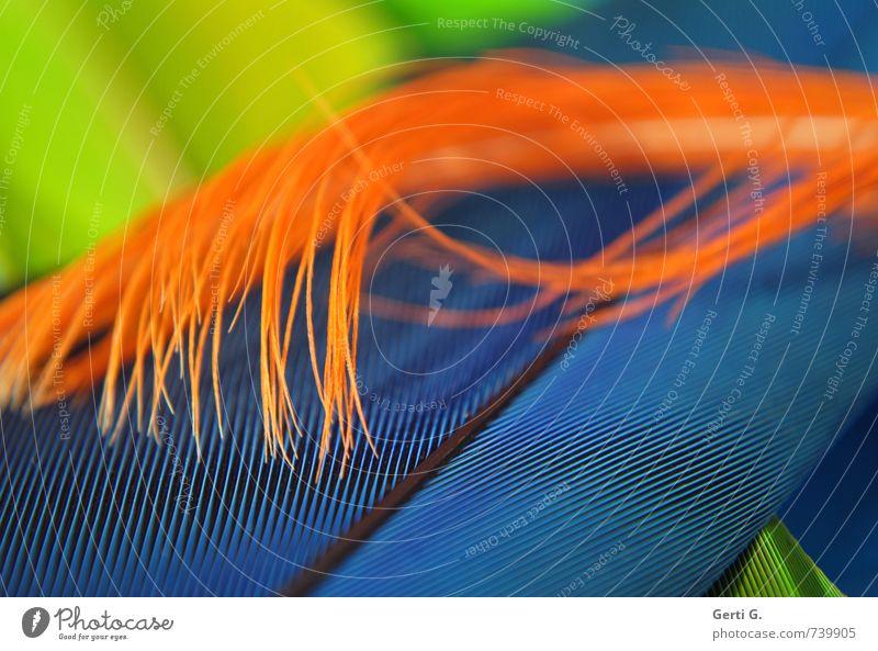 miX Feder Linie blau orange Glück Lebensfreude Farbe Ordnung Strukturen & Formen mehrfarbig knallig grell Kakadufeder Papageienfeder Sittichfeder Farbflash
