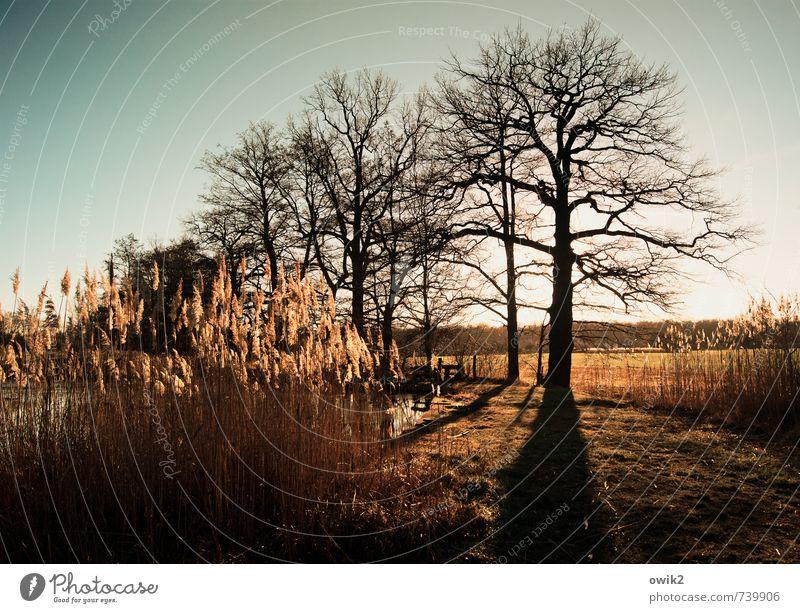Leuchtturm Umwelt Natur Landschaft Pflanze Wolkenloser Himmel Horizont Klima Wetter Schönes Wetter Baum Sträucher Röhricht leuchten hell Hoffnung Idylle
