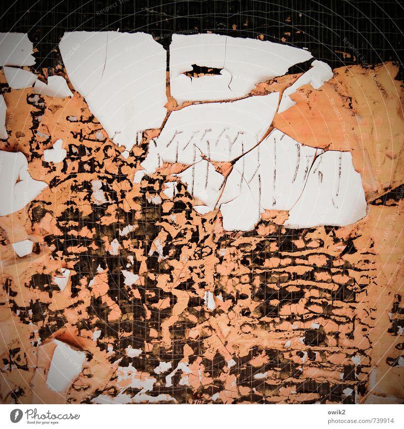 Entropie Kunststoff alt dehydrieren trashig trist trocken verrückt grau orange schwarz Umweltverschmutzung Vergänglichkeit Wandel & Veränderung Zerstörung