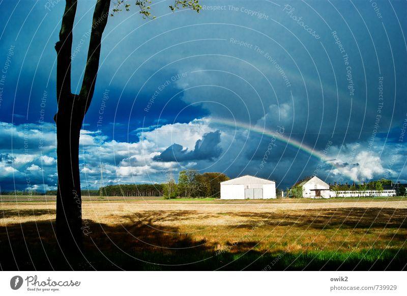 Regenbogen Umwelt Natur Landschaft Himmel Wolken Horizont Klima Wetter Schönes Wetter Pflanze Baum Haus hell ruhig Idylle Vergänglichkeit Wandel & Veränderung