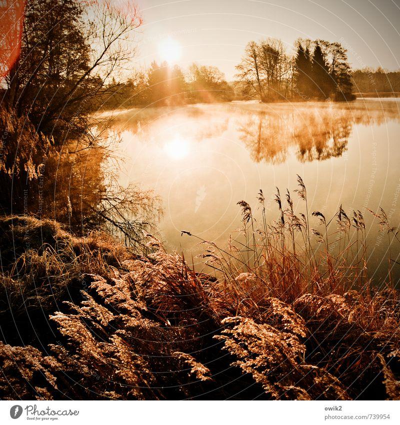 Lichtshow Umwelt Natur Landschaft Pflanze Himmel Horizont Sonne Klima Wetter Schönes Wetter Seeufer leuchten gigantisch glänzend Glück Unendlichkeit natürlich