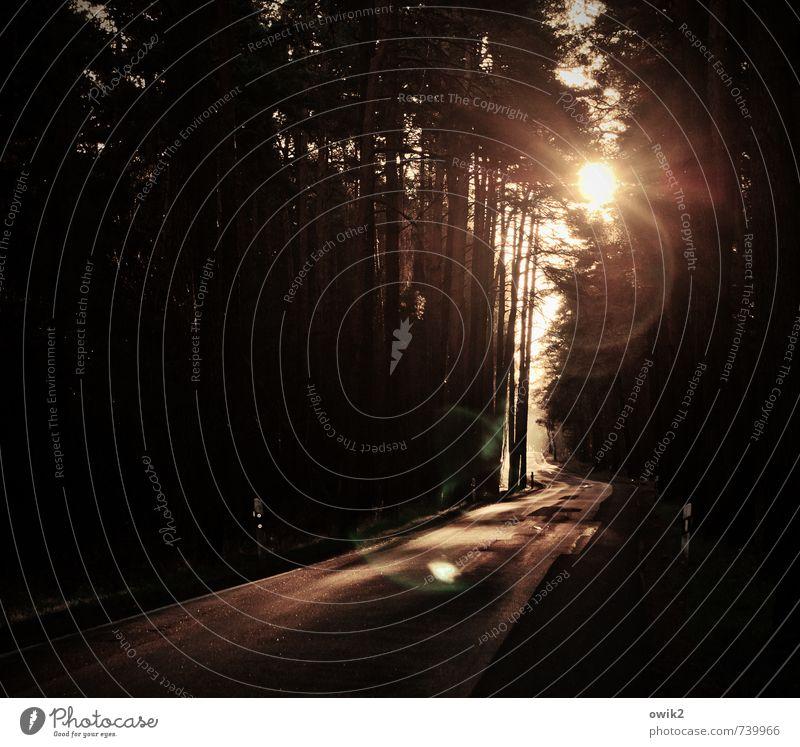 Lichtung Wald Verkehr Verkehrswege Straße Kurve leuchten bedrohlich dunkel Beleuchtung geradeaus Baum Farbfoto Gedeckte Farben Außenaufnahme Menschenleer