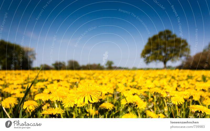 Wenn wir groß sind, fliegen wir davon Natur Pflanze Himmel Frühling Schönes Wetter Wildpflanze Wiese Blühend Wachstum außergewöhnlich Unendlichkeit natürlich