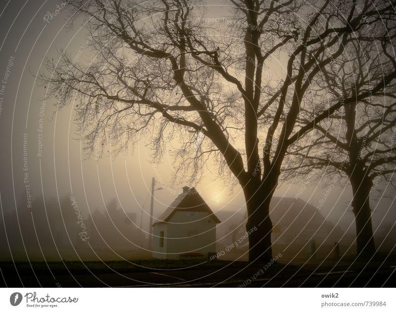 Nebliger Morgen Umwelt Natur Landschaft Klima Wetter Schönes Wetter Nebel Pflanze Baum Ast Holz kahl karg Gebäude Wartehäuschen Bushaltestelle leuchten klein