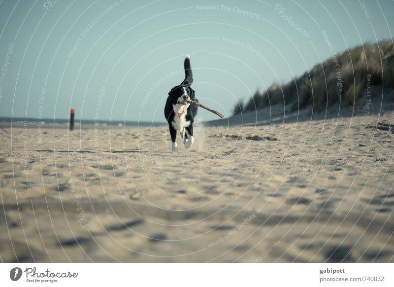 hol das Stöckchen Hund Natur Ferien & Urlaub & Reisen Sommer Sonne Landschaft Freude Tier Strand Bewegung Frühling Küste Glück Freundschaft Idylle laufen