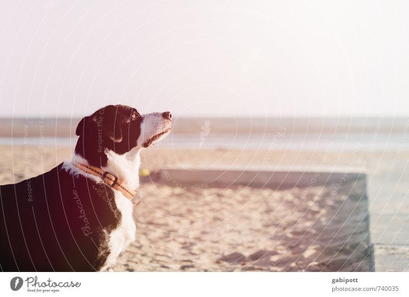 So riecht der Sommer Hund Natur Ferien & Urlaub & Reisen weiß Meer Erholung Tier Ferne Strand schwarz Wärme Freiheit Glück träumen Freizeit & Hobby