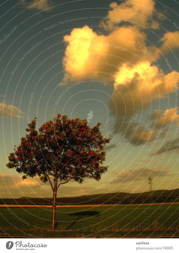 Stadt und Land II Wolken Horizont Abenddämmerung dramatisch Landleben Vogelbeerbaum
