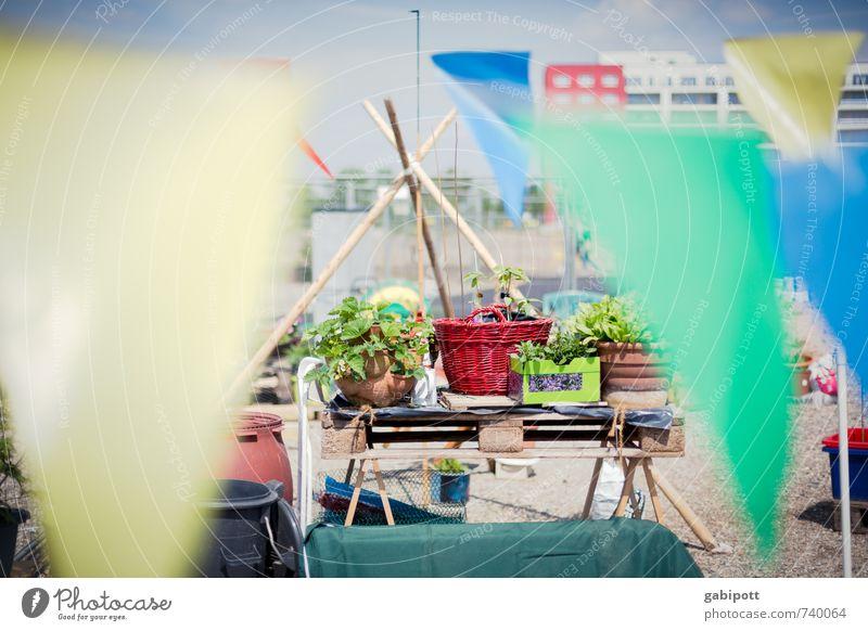 Hessentreffen 14 | urban gardening Natur Stadt Pflanze Sommer Sonne Erholung Landschaft Leben Frühling natürlich Garten Freizeit & Hobby Lifestyle Sträucher