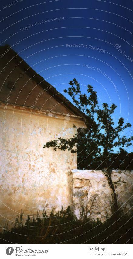 unterm birnenbaum Baum Ferien & Urlaub & Reisen Haus Gras Mauer Hütte Scheune Donau Serbien